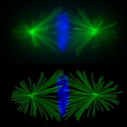 Second International Challenge on 3D Deconvolution Microscopy