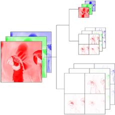 Biomedical Imaging Group > Multichannel SURE-LET Wavelet Denoising